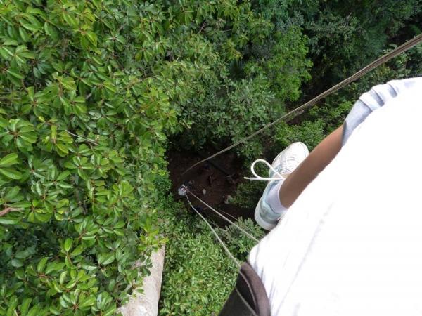 Ascension à la canopée