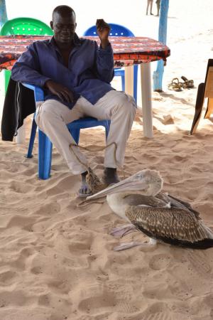 Paco et son amour des pélicans qu'il sauve des pêcheurs.