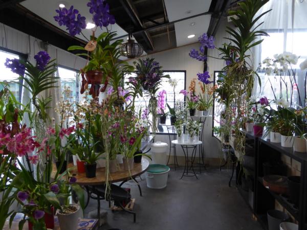 des orchidées éblouissantes