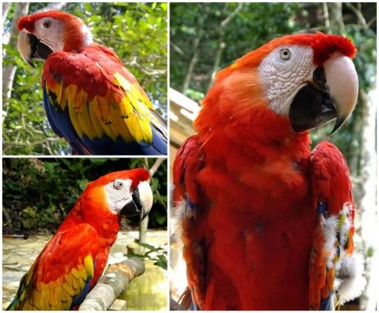 Oiseaux de la réserve