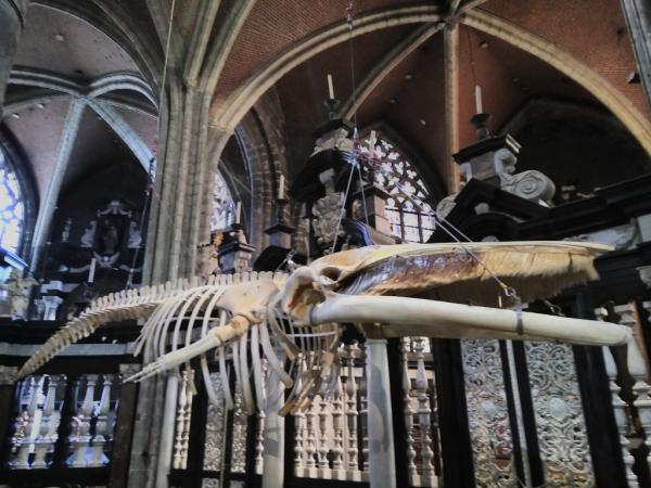Squelette de baleine, Cathédrale Saint-Bavon, Gand, avril 2018, SB.