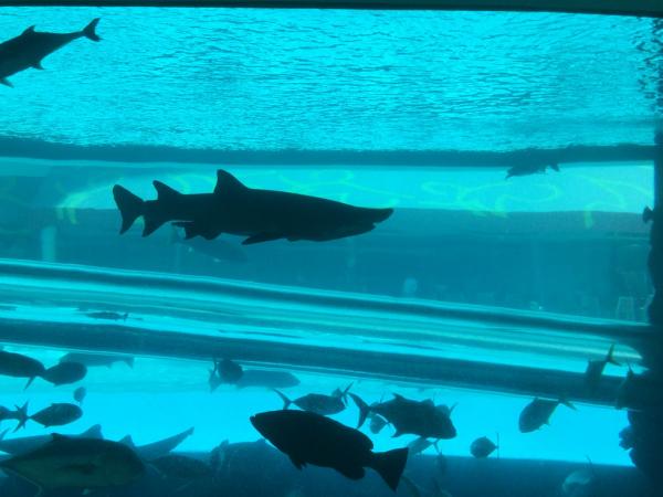 aquarium dans la piscine