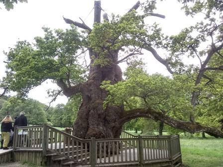 Le chêne millénaire qui, selon la légende, a caché le prêtre Guillotin en son tronc alors qu'il était poursuivi. Celui-ci a été sauvé par une fée...