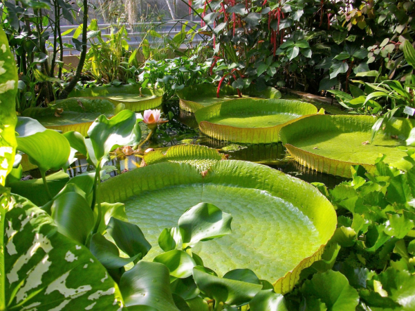 JARDIN BOTANIQUE JEAN-MARIE PELT - Parcs et jardins ...