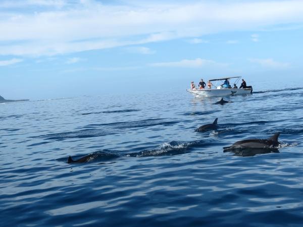 Nos amis les dauphins