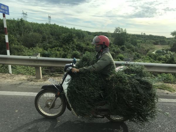 Vietnam : tout est transportable en scooter ..