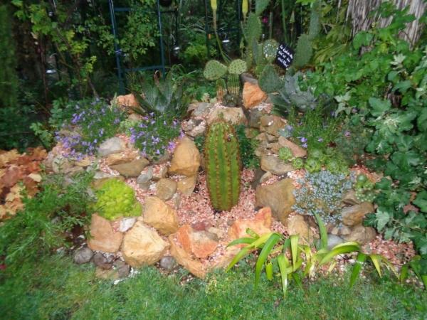 Rocaille avec plantes grasses rustiques