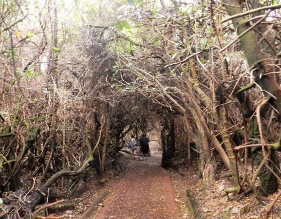 Accès au second cratère du volcan Poas au travers d'une forêt imprégnée par les pluies acides