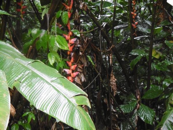 végétation des canaux