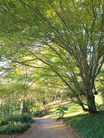 Arbre dans le parc du Thabor