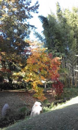 un arbre aux couleurs d'automne