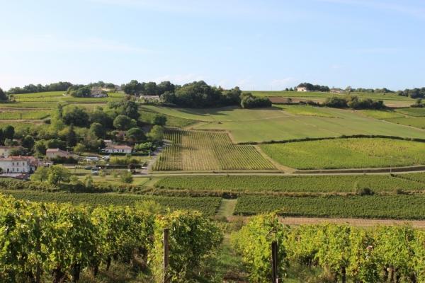 Vignes du Domaine plantées à flanc de coteau : très bonne exposition des raisins.