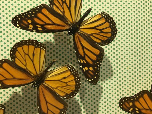 Insectarium