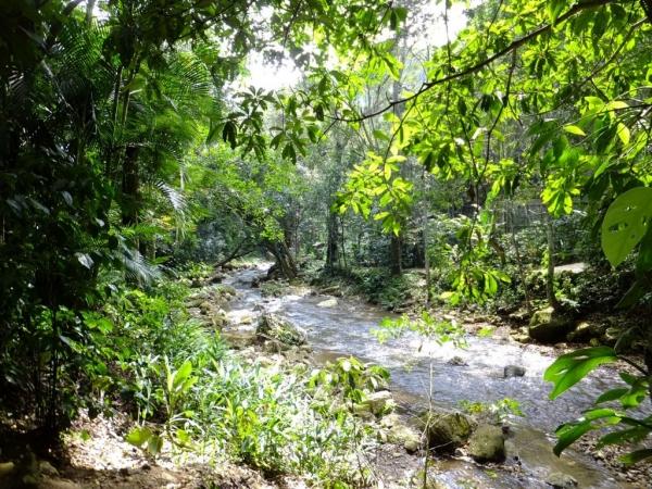 La végétation luxuriante de la réserve