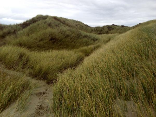 Vegetation des dunes