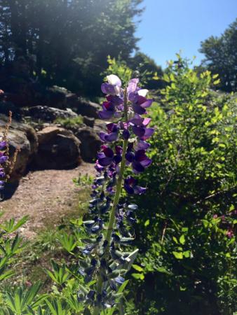 Jardin d 39 altitude du haut chitelet parcs et jardins - Jardin d altitude du haut chitelet ...
