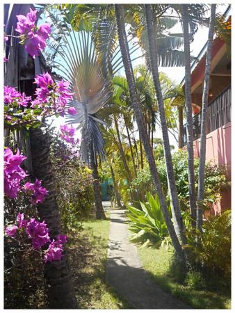 jardin tropical de Couleurs Caraibes