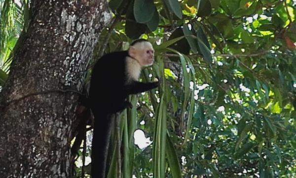 singe à l'entrée du parc