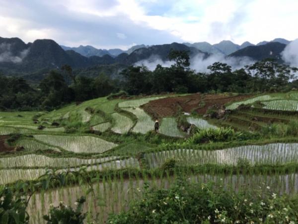Rizières dans le parc national de Pu Luong