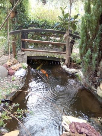 Bassin avec des carpes koïs