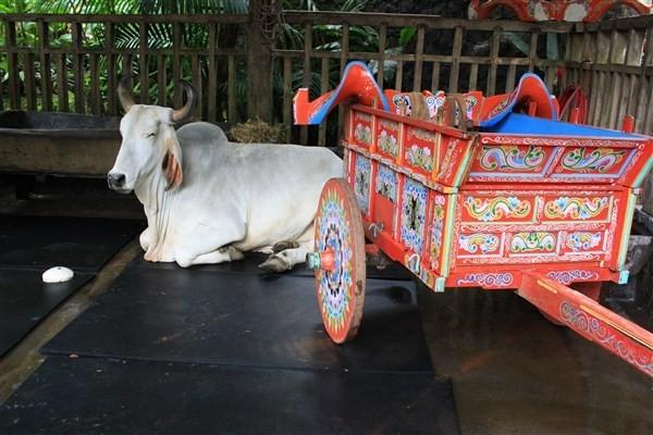 La fameuse charrette colorée