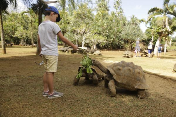 Nourrir les tortues