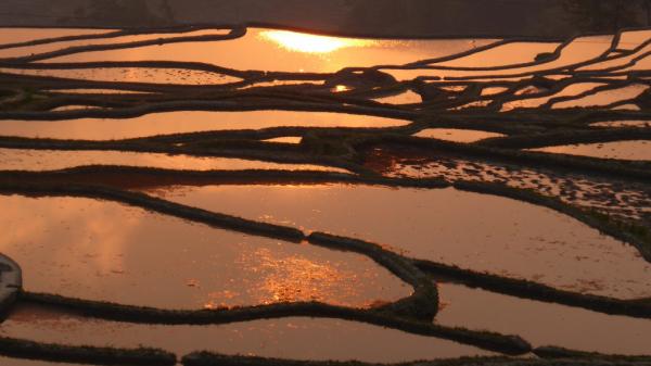 rizières Yuanyang