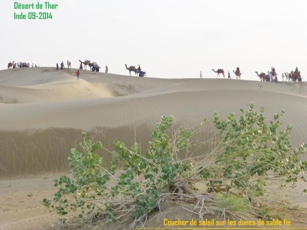 Coucher de soleil sur les dunes du désert de Thar