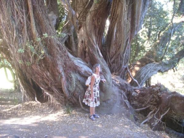 des arbres fantastiques