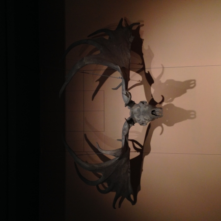 Cerfs géant présent durant la pré-histoire