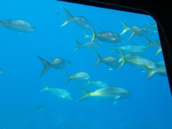 Beaucoup de poissons coquins datant