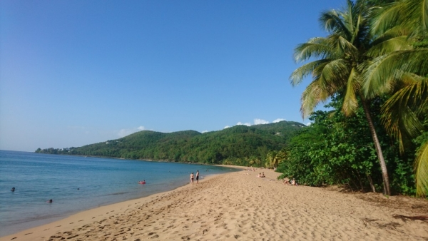 Beaux rivages et noix de coco