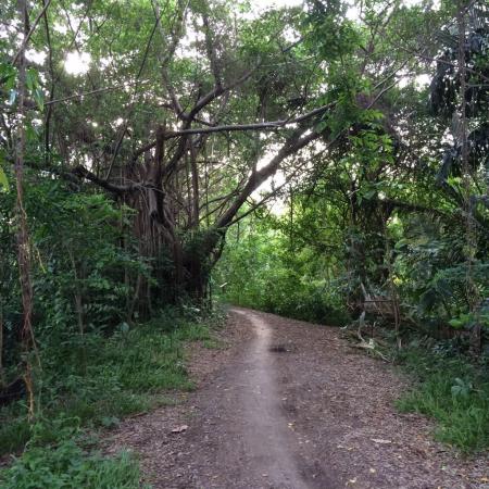 Jungle de Bangkok