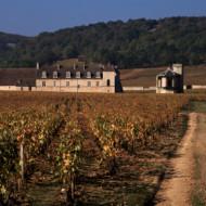 le château parmi les vignes