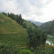 Randonnée dans les rizières de Sapa