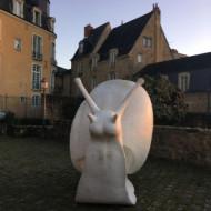 Escargot géant dans le square en décembre 2017