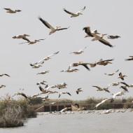 le parc du djouj est le 3eme parc ornithologique du monde et sa visite est un moment de magie