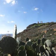 Le temple et les cactus