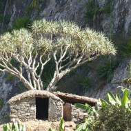 Habitat traditionnel (Santo Antao)
