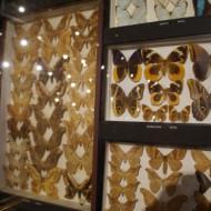 Très belle exposition de coléoptères,papillons,araignées...