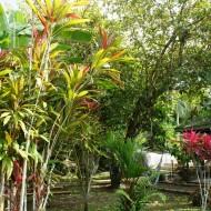 Le Colibri Rouge (jardin)