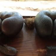 les fameux coco fesse