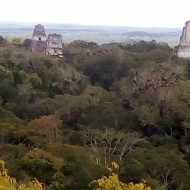 vue sur le site de Tikal