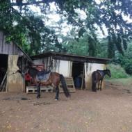 Une partie du ranch