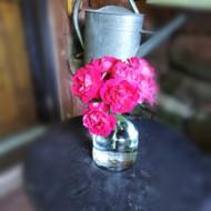 Les roses du jardin...