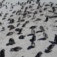 Pingouins sur sable blanc