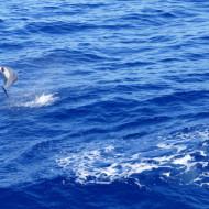les dauphins parfois