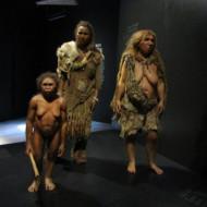 Parmi les premiers hominidés