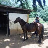 Pako et un de ses chevaux