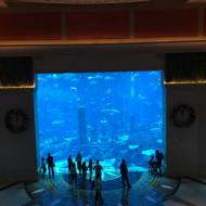 Vue de l'aquarium